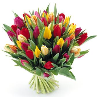Tulipany – kwiaty, których w kwiaciarni nie może zabraknąć