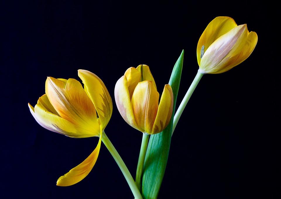 Kwiaty dla kobiety