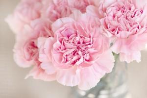 Porady, dla kochających kwiaty