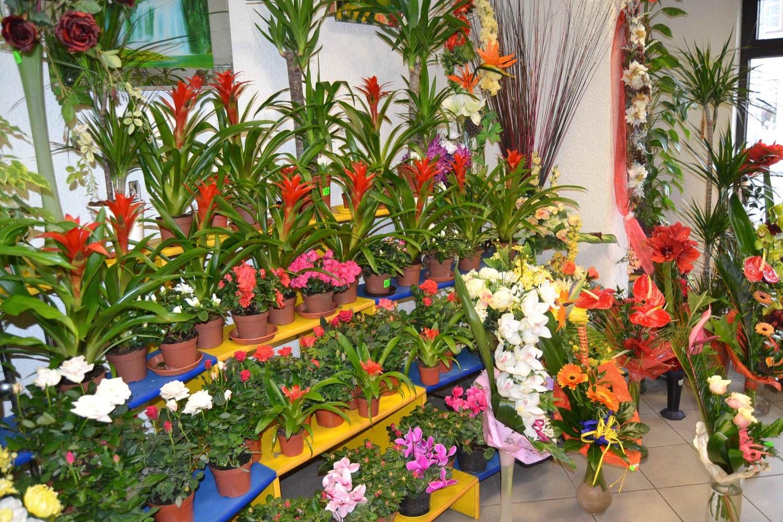 Tych kwiatów nie może zabraknąć w kwiaciarni – tulipany