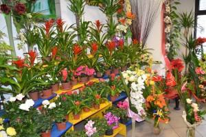 Przedłużanie trwałości ciętych kwiatów