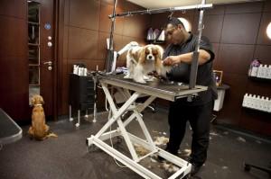 Salon piękności dla psów i kotów