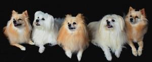 Salon strzyżenia psów