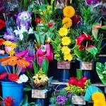 Otwieramy kwiaciarnię