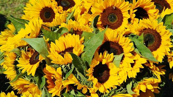 Materiały pomocnicze niezbędne w każdej kwiaciarni
