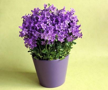 Kwiaty doniczkowe dostępne w kwiaciarniach zimą